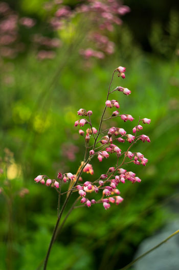 Beauty In Nature Close-up Day Flower Flower Collection Flowers Focus On Foreground Fragility Freshness Growth Nature No People Outdoors Pink Color Plant
