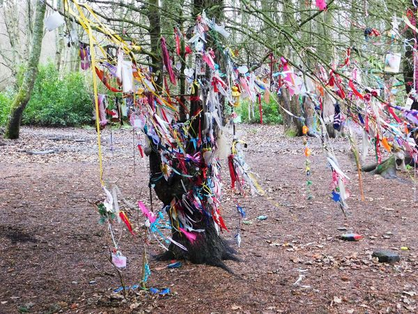 The magical fairy world found deep within Fullarton Woods, Troon, South Ayrshire, Scotland. Ayrshire Day Fairy Woods Fullarton Woods Hanging Multi Colored No People Outdoors Tree Troon