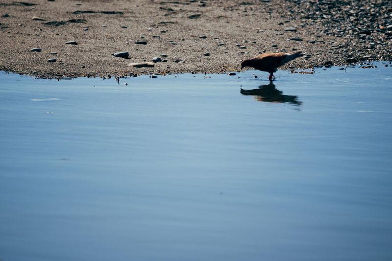 Bird at lakeshore