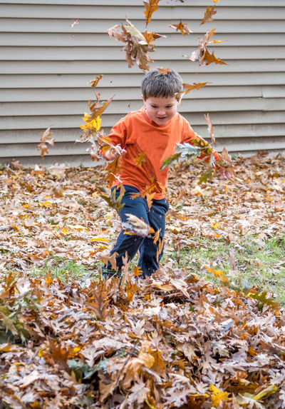 cute little boy playing in a big pile of leaves Autumn Child Leaf Plant Part One Person Childhood Boys Change Casual Clothing Males  Nature Offspring Day Outdoors Innocence Leaves Fall Oak Leaves Caucasian Ethnicity Fun Active Children Nature Seasonal
