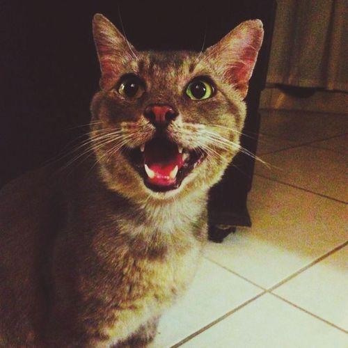 My cat.♥