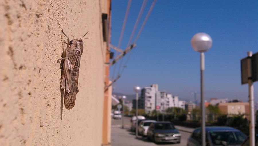 Close-Up Of Grasshopper On Wall Against Clear Blue Sky