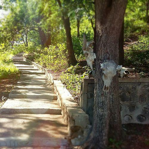 Stairway to another stairway. Jawatimur Balurannationalpark INDONESIA