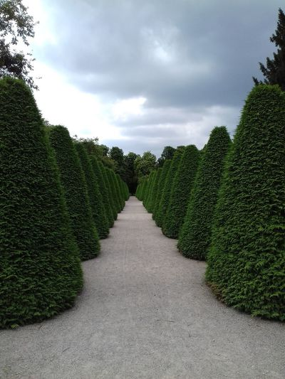 Allee Parc Park Baumreihe Taxus Geometrie Plant Growth Sky Cloud - Sky Tree Green Color Direction The Way Forward No People Nature Footpath Beauty In Nature Diminishing Perspective Hedge Outdoors Agriculture Tranquility