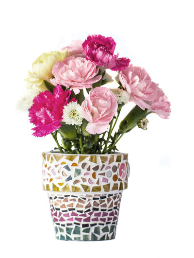 Close-up of pink roses in vase against white background