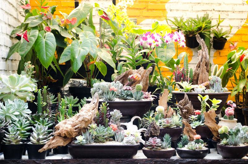 Best Nature Photography EyeEm Awards 2016 Eyeem Awards 2016 - Outdoors Eyeem Street Photography Awa Gardening Nature Photography Planty Street Photography Terrariums