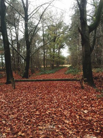 Showcase: November Woods Fall Nature