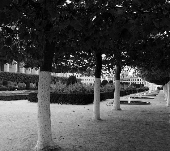 Montdesarts Bruxelles Belgium Blackandwhite Outdoors Indiansummer Bruxelles-Capital Nature No People Black And White Friday