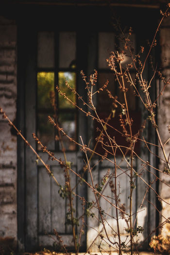closed doors Door Blurred depth of field Reeds Dried Plant Abandoned House Abandoned Places Aesthetic Close-up EyeEmNewHere