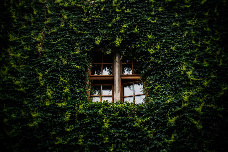 Low Angle View Of Window Surrounded By Creepers
