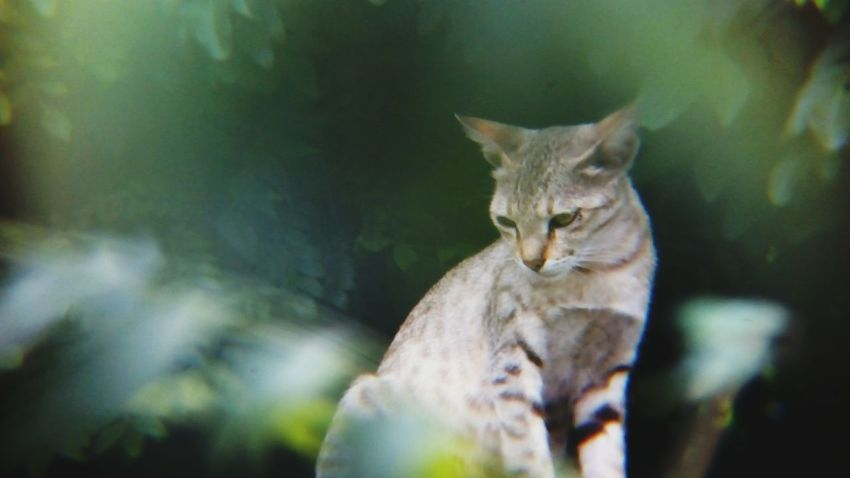 One Animal Animal Themes No People Mammal Animal Wildlife Day Domestic Cat Nature Outdoors Domestic Animals Cat Shot With Mobile Clip Lens The Week On EyeEm Pet Portraits