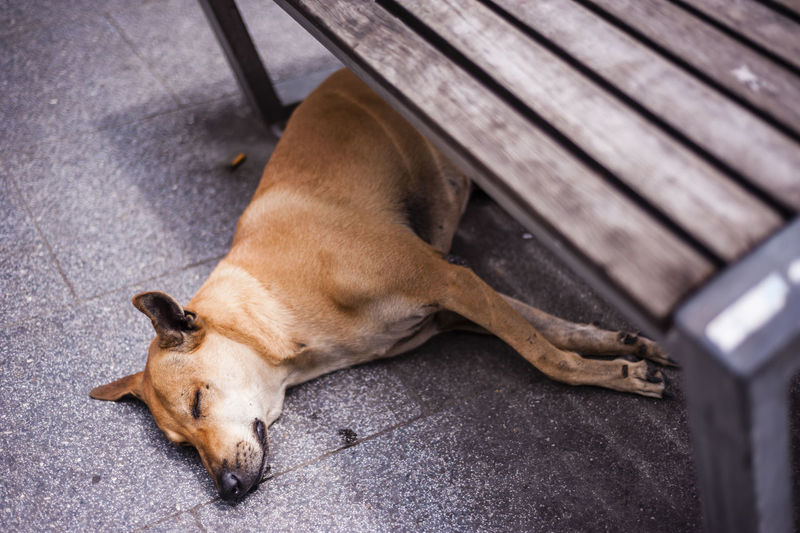 Animal Animal Themes Canine Close-up Dog Domestic Animals Lying Down Mammal Pets Relaxation Resting Sleep Under The Bench Sleeping Dog Stray Animal Tired Adapted To The City