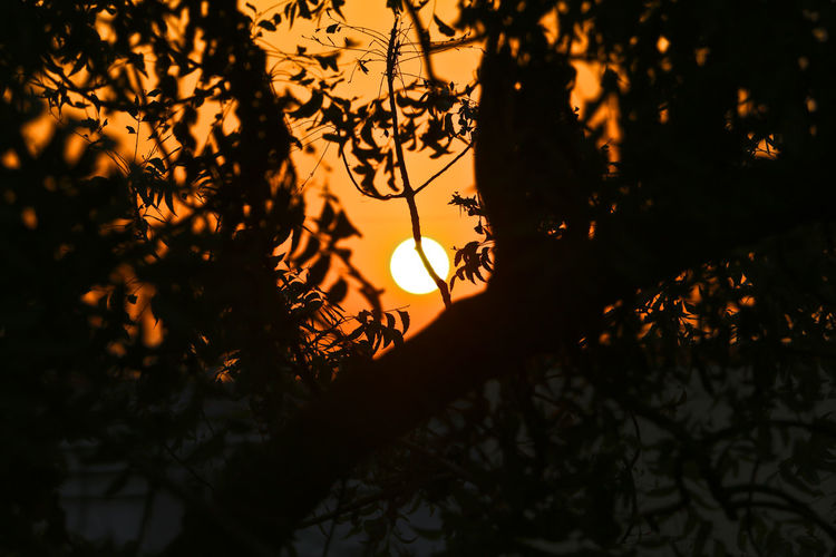 Beauty In Nature Black Black And Orange Black And Orange (: Branch Close-up Growth Nature Night No People Orange Orange Color Outdoors Red And Blue Scenics Silhouette Sky Sun Sunset Tranquil Scene Tranquility Tree