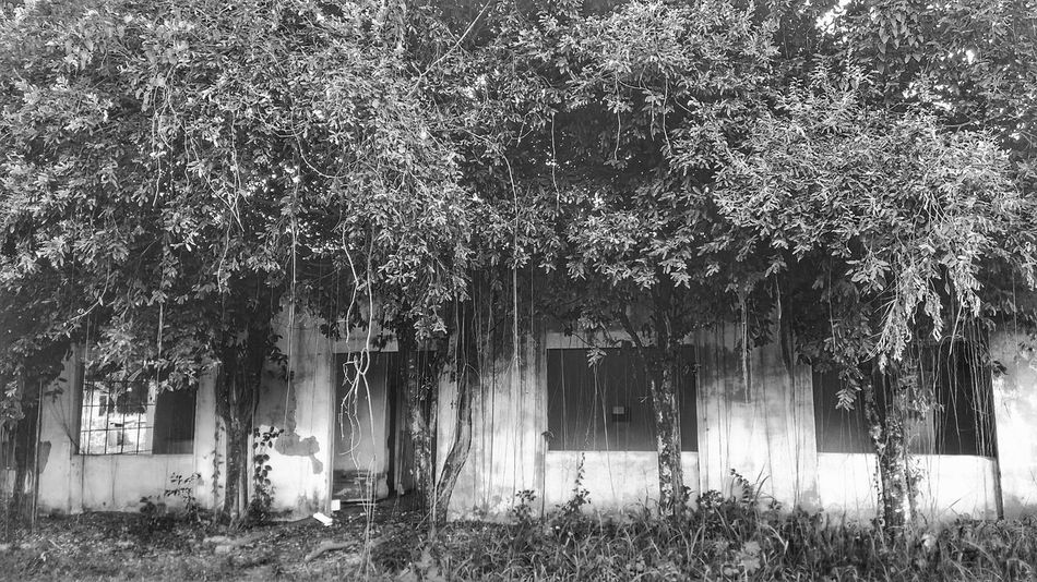 Day No People Outdoors Growth Building Exterior Tree Architecture Nature Abandoned Place Abandonedplaces The Week On Eyem Week On Eyem The Week Of Eyeem Bw_collection P&B B&w Sommergefühle Wine Not Let's Go. Together. EyeEm Selects
