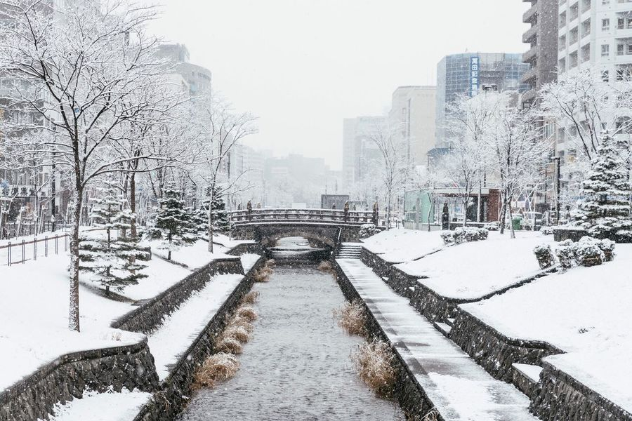 Snow of Sapporo My Traveling Photography My Street Photography From My Point Of View Streetphotography City Street Winter Cold Temperature Snow Snowing Weather Tree Building Exterior Outdoors No People Covering Cold Urban Exploration Urban Photography My Year My View EyeEm Best Shots The Street Photographer - 2017 EyeEm Awards The Great Outdoors - 2017 EyeEm Awards