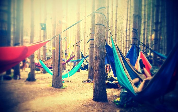 Electric Forest Outdoors Trees Landscape