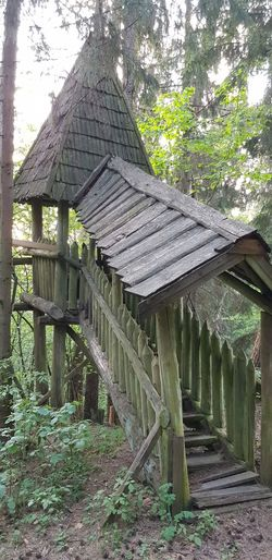 Forest Spring Green Day Tree Architecture Built Structure Shelter Thatched Roof