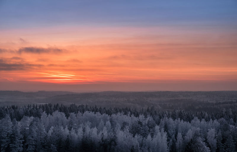 Scenic view with sunset and frosty trees at winter evening in Finland Evening Light Finland Moment Of Silence Sunset_collection Winter Atmospheric Mood Beauty In Nature Cold Temperature Colorful Sky Forest Frosty Trees High Angle View Idyllic Landscape Nature No People Outdoors Romantic Sky Scenics Sunrise Sunset Tranquil Scene Tranquility Tree Winter