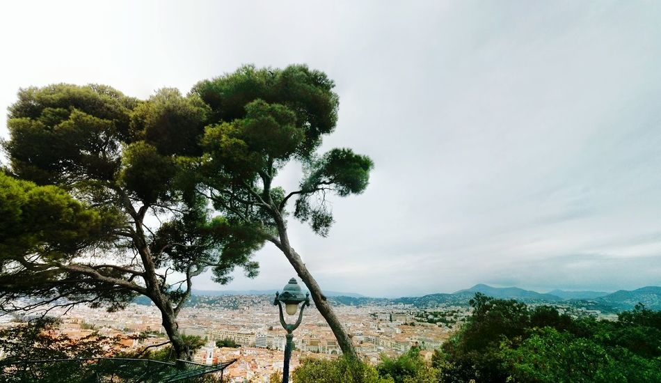 Nice / Nizza Trees City Enjoying The View Great Views France Overview OverviewPoint City Overview