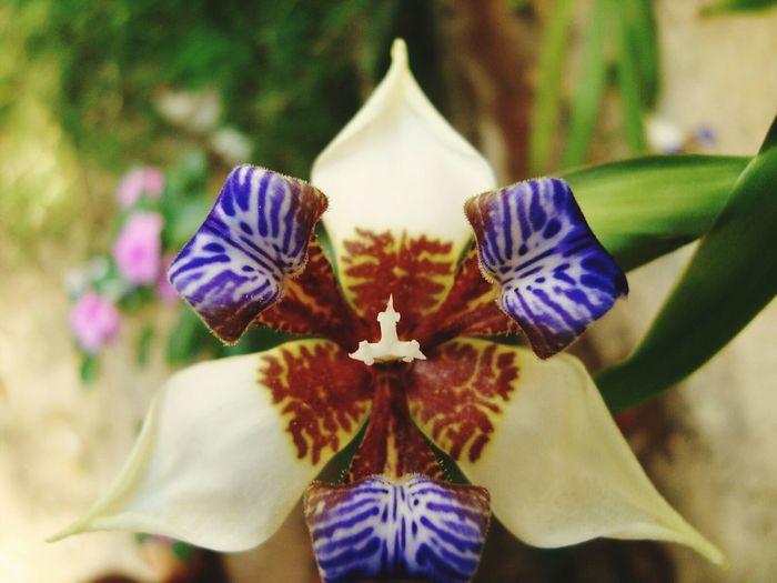 Quintal de casa!!! Flawers Flores