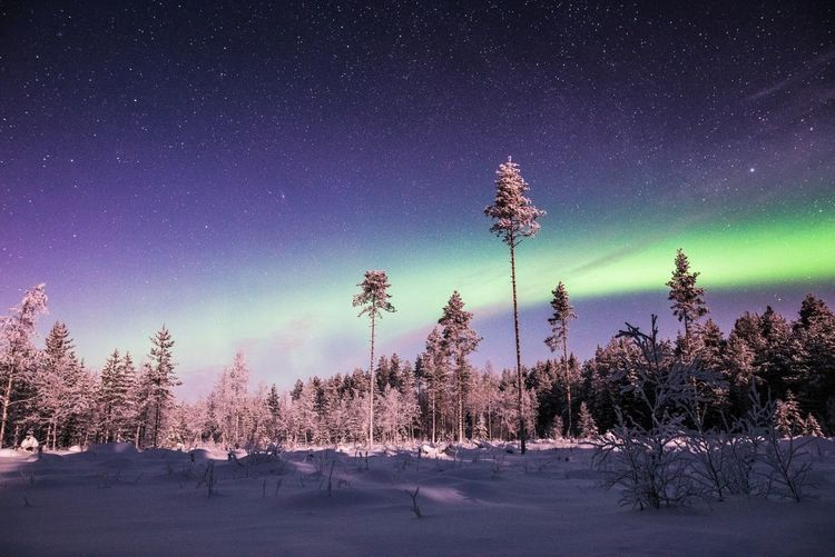 Aurora arc over the wilderness Tree Sky Snow Winter Night Beauty In Nature Scenics - Nature Nature Tranquility Star - Space No People Tranquil Scene Space Astronomy Outdoors Purple Aurora Borealis Northern Lights Bright Green Color Travel Landscape Freshness Exploring Wilderness
