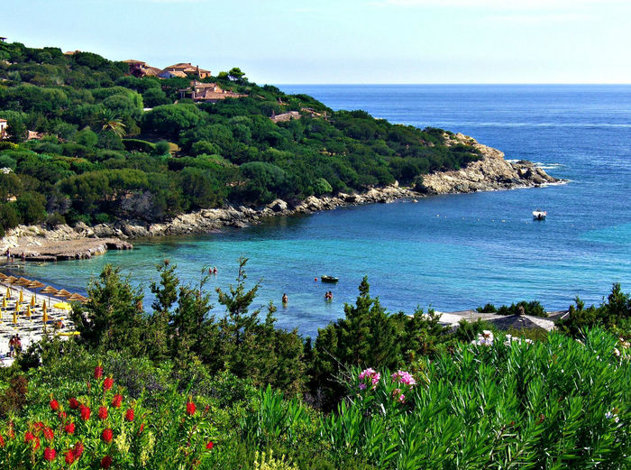 Sardinia - View Sardinia Sardegna Italy  View Beach Beauty In Nature Blue Clear Sky Cliff Day Flower Green Color Growth Horizon Over Water Idyllic Mountain Nature Outdoors Plant Scenics Sea Sky Tourism Tree Vacations Water