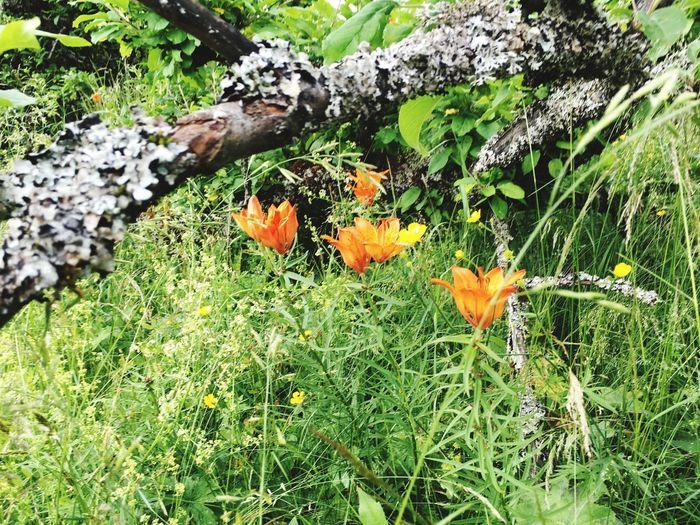 Flowers Flowers,Plants & Garden Flower Orange Orange Color Grass Nature Landscape Detail Tree Trunk Sunny Day Details Of Nature