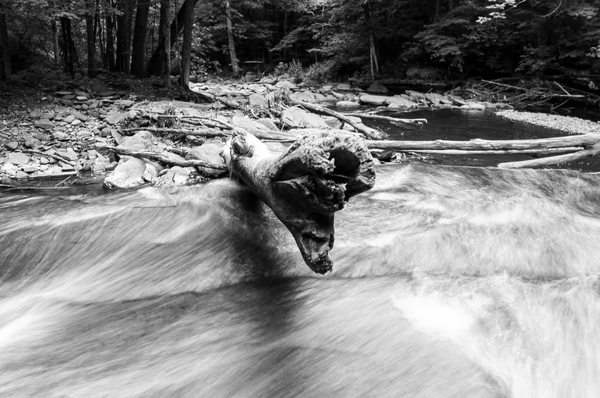 Log in the water Day Outdoors Nature Speed Motion Leisure Activity One Person Adventure Extreme Sports Water Sport Real People Full Length Mammal Domestic Animals Beauty In Nature Tree One Man Only People Only Men Waterfalls Monochrome Blackandwhite Fineart_photo Canonphotography