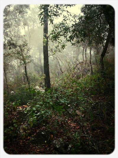 Nature Landscape On The Road Mountain in the forest, Pueblo de Jacala, Hidalgo. México.