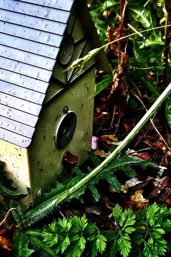 A slightly more 'commercial' version, if anyone wants a photo of a plastic birdhouse that's just sitting there among a pile of weeds and recovering after a heavy rain. Birdhouse Birdhouse In Yard Birdhouse In Grass Birdhouse In Bushes Bird Feeder Feeder Birdfeeder Overgrowth Overgrown Weeds Found In The Yard House Small House Miniature House Toy House Still Life Vibrance Vibrant Colors In Nature Found Object Light And Shadow Shadow And Light Leaves After The Rain After It Rains