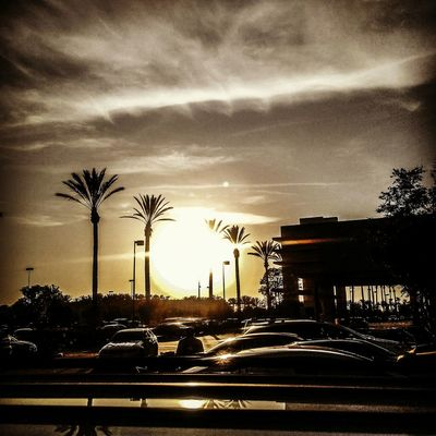 Parking Lot Sunset Sunset Silhouettes Palm Trees Sky And Clouds Lowes Tustin California Orangecounty  This Week On Eyeem
