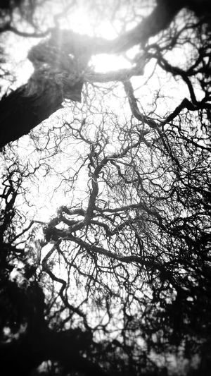 I Name It: The tree of expressions. Black And White Nature Arts