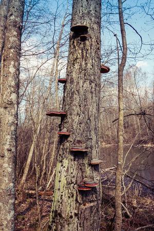 Fungi stairs Fungi Fungi Growth Fungi On Tree Fungus Fungus On Tree Fungus Patterns Fungusphoto Nature Tree Tree Trunk