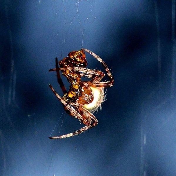 Macro Macro Spider Spider