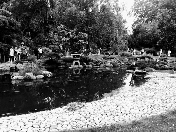Kyoto gardens Water Reflection Day Outdoors Nature Tree Nature Black And White