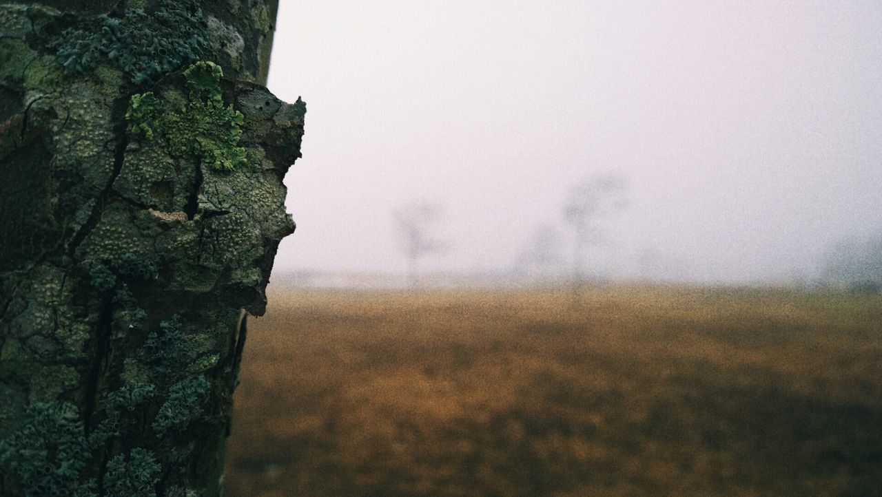 Close-up of cropped tree trunk against blurred background