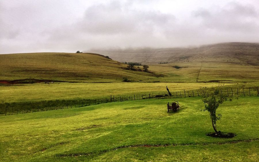 South Africa Africa Landscape Grass Sky Field Green Tranquil Scene Nature Green Color No People Scenics Outdoors Agriculture Tree IPhone IPhoneography Beauty In Nature Mountain Betterlandscapes