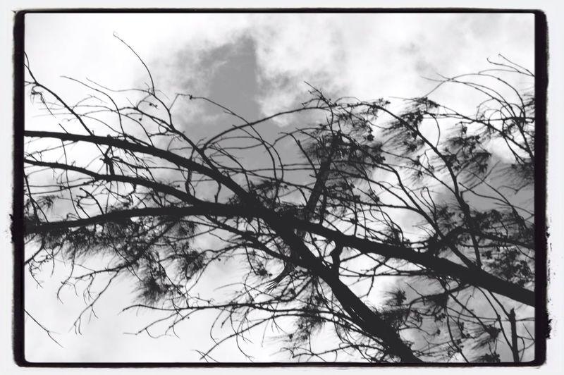 Black & White Nature EyeEm Best Shots