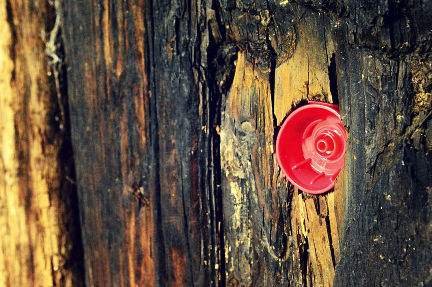 Bottle Top Close-up Day Door No People Outdoors Red Safety Textured  Tree Tree Trunk Weathered Wood - Material