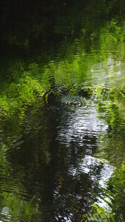 Beautiful Nature Beauty In Nature Circles On The Water Exceptional Photographs EyeEm Best Shots - Nature EyeEm Gallery EyeEm Nature Lover Green Color Idyllic Ireland🍀 Like A Paint Love Nature❤ My Point Of View Nature No Filter, No Edit, Just Photography No People Outdoors Reflection Reflections In The Water Taking Photos Tranquil Scene Tranquility Water