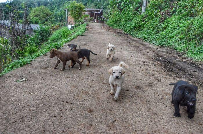 MaeTang Chiangmai Thailand Pets Tree Dog Piglet Road