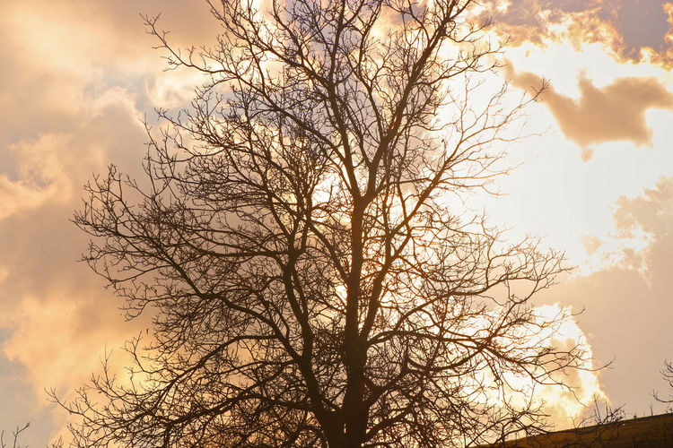 Beech Tree Outdoors Sunset Sky Clouds Highlights Backlit Tree Silhouette Bare Tree Cloud - Sky Branch Sky Low Angle View Beauty In Nature No People Nature Scenics - Nature Sunset Plant