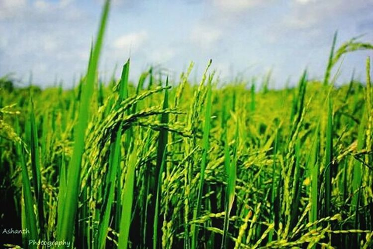 Green Fields Check This Out Hello World Photography Photoyourworld
