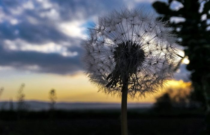 Plant Springtime Sunset_collection Mothernature Natureporn Landspace Nature Photography YellowNature Sky Cloud - Sky Beauty In Nature Growth Tree Outdoors No People Tranquility Sunset Field Scenics Tranquil Scene Landscape Single Tree Close-up Day
