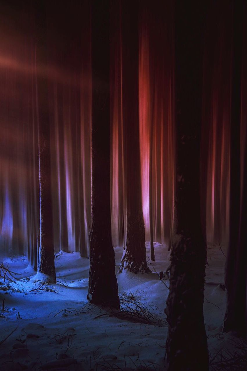 Snow Sunset Light And Shadow Light Colors Nature Landscape Mountain Forest Trees Tree Night Illuminated No People Beauty In Nature Nature Land Scenics - Nature Tranquility Winter Cold Temperature Architectural Column Outdoors Light - Natural Phenomenon Snow Curtain Travel Environment Travel Destinations Stage