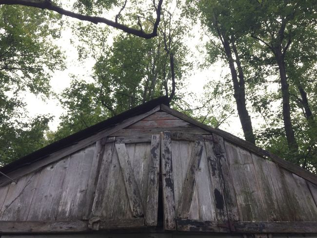 Barn Disrepair IPhoneography Eye4photography  Tree Built Structure Plant Architecture Building Exterior No People Nature Low Angle View Wood - Material Building House Forest Roof