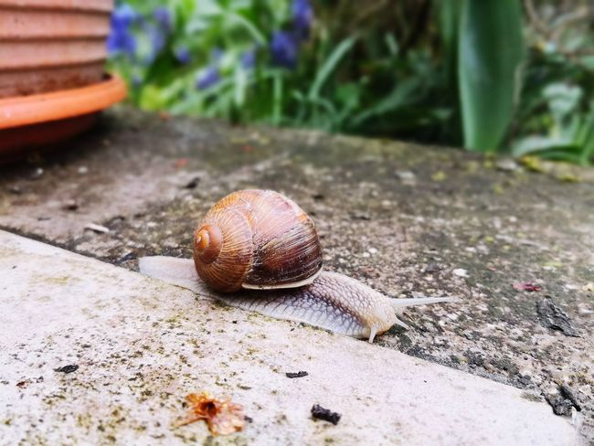 today was snails race 🐌 Heute war Schnecken rennen 🐌 Animal One Animal No People Day Nature Outdoors