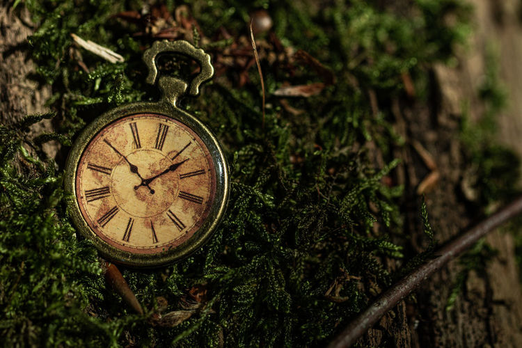 Close-up of clock on plant