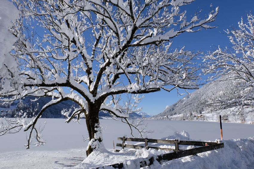 Frozen Lake Peaceful View Snow Covered Branch Beauty In Nature Cold Temperature Frozen Lake Lake View Mountain Nature No People Outdoors Peaceful Peaceful Place Scenics Snow Snow Covered Snow Covered Landscape Snow Covered Mountains Snow Covered Trees Tranquility Winter Winter Wonderland