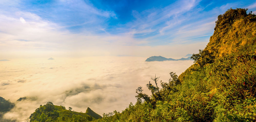 Misty Over The Mountains The Great Outdoors - 2018 EyeEm Awards Misty Beauty In Nature Cloud - Sky Day Environment Fog Growth Idyllic Landscape Moutains Nature No People Non-urban Scene Outdoors Panoramic Phuchidao Plant Remote Scenics - Nature Sky Tranquil Scene Tranquility Tree Foggy Mist Scenics